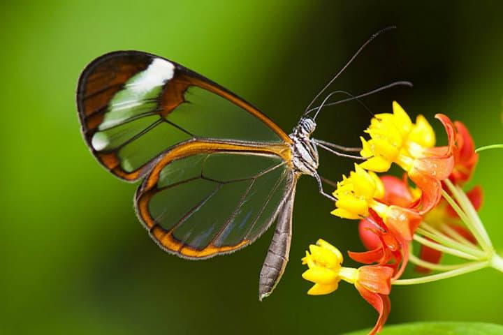 mariposas en chiapas