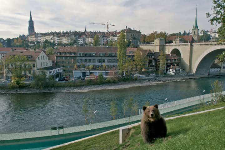 parque de los osos