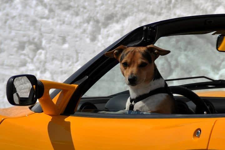 viajar con mascotas (3)
