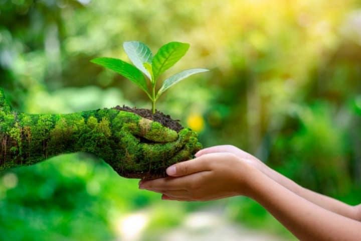 Amigable con el medio ambiente. Foto: Archivo