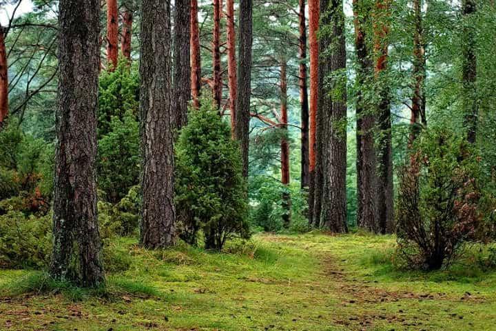 Bosque de Valle de Bravo