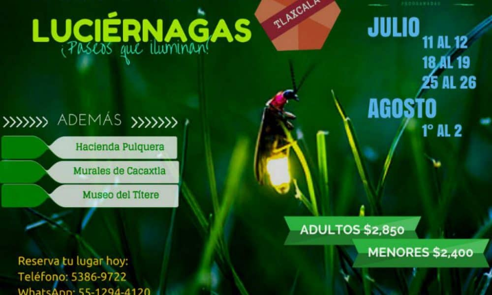 Recorrido por santuario de luci rnagas tlaxcala y sus luces Espectaculo de luciernagas en tlaxcala