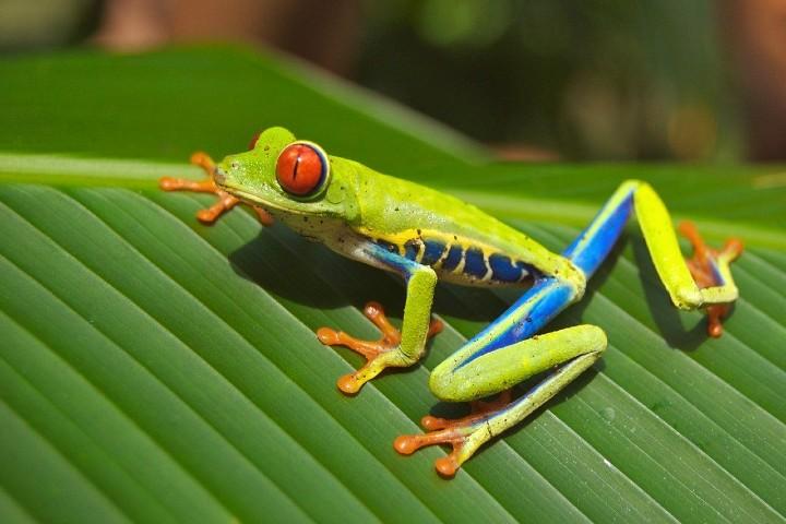 Ecoturismo en Monteverde en Costa Rica. Foto David Mark.