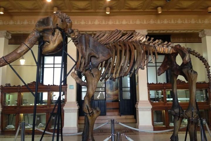El Museo de Geología de la UNAM tiene una exposición muy basta. Foto Archivo.