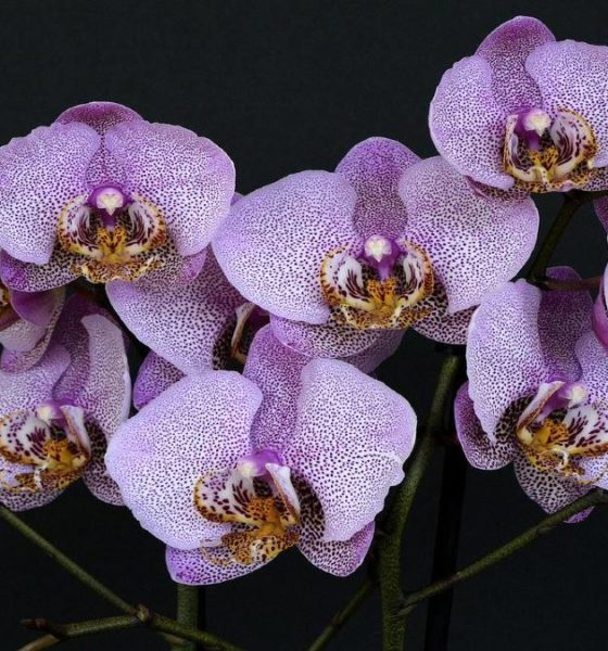 Exposición de orquídeas en New York. Foto Anncapictures.