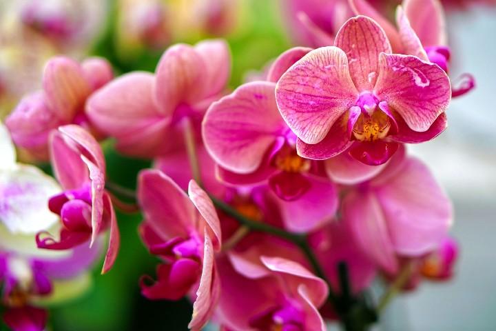 Exposición de orquídeas en New York. Foto Matthias Böckel
