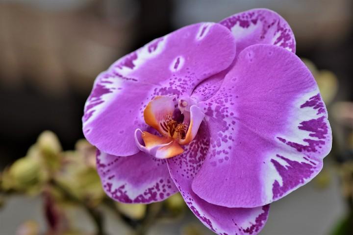 Exposición de orquídeas en New York. Foto Pixabay