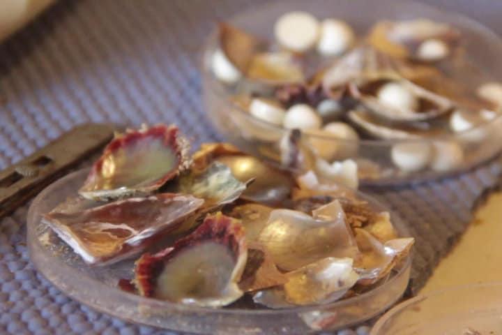 Granja de perlas en Cozumel.Foto.Youtube.12