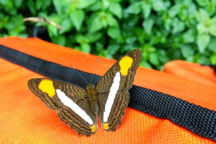 Mariposa naranja en Iguazú Foto El Souvenir ok