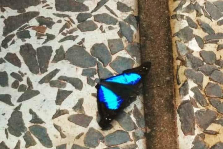 Mariposa. Foto Archivo.