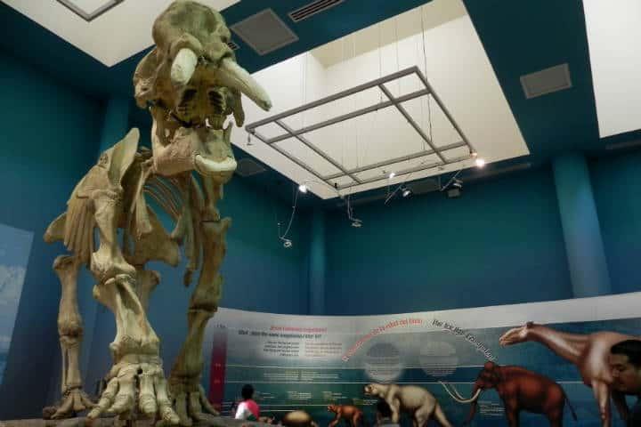 Museo del desierto Chihuahua Foto El Souvenir 3