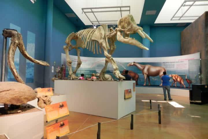 Museo del desierto Chihuahua Foto El Souvenir 5