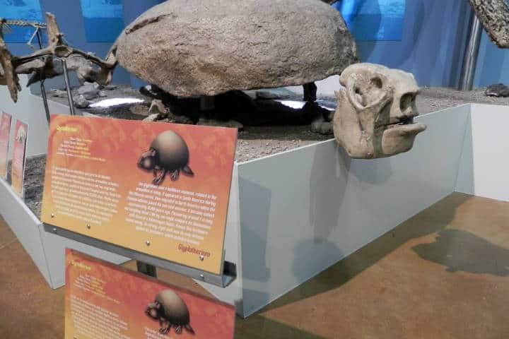 Museo del desierto Chihuahua Foto El Souvenir 6