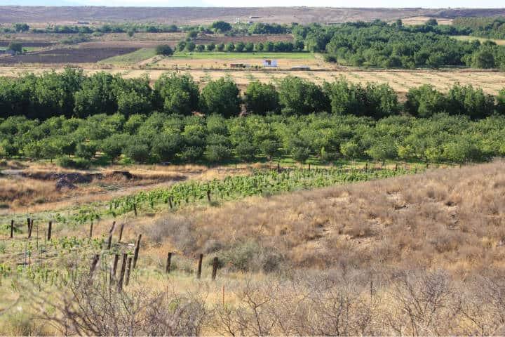 Nogales en el desierto de Chihuahua. Foto Archivo 3
