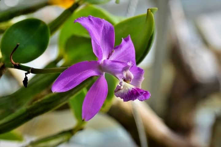 Orquídeas en New York Foto Capri23auto