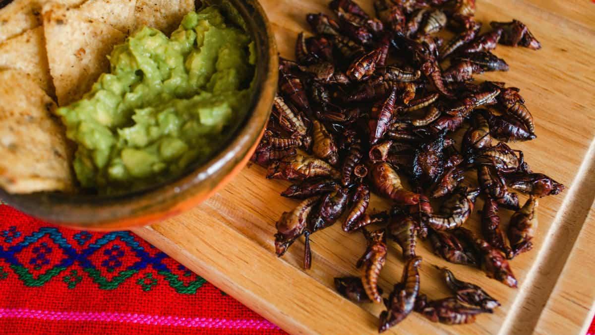 Portadas. Tour gastronómico en la CDMX. Foto Universidad del Claustro de Sor Juana 1