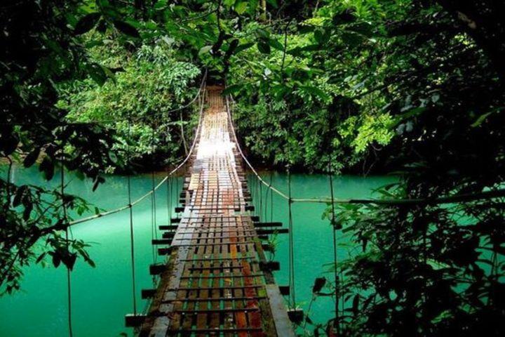 Puente Colgante Wilford Guindon. Foto Healthywildanfree.