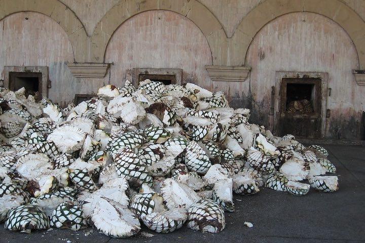 Tequila, México. Foto mlaursen