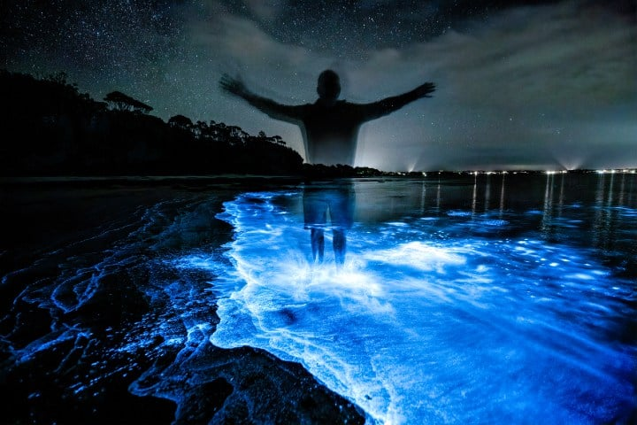 bioluminiscencia (2)