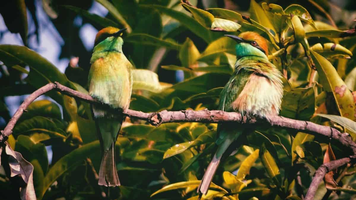 Aves del sur de Mayab. Foto: Brazil Topno