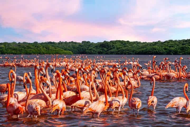 Flamingos en Celstun México Foto Lilla Green