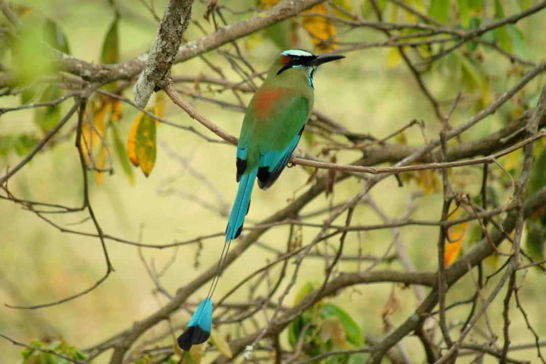 aves del mayab