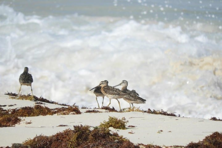 Programa de Monitoreo de Aves. Foto: Fundación de Parques y Museos de Cozumel