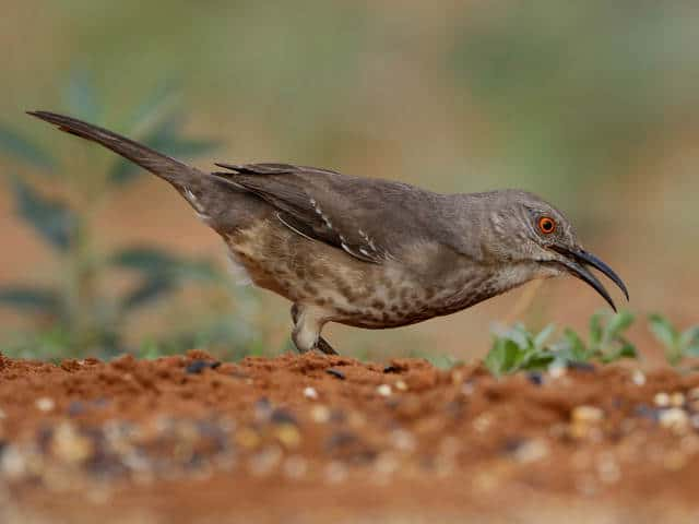 observacion-aves-mayab-640px-08