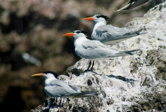 observacion-aves-mayab-640px-12