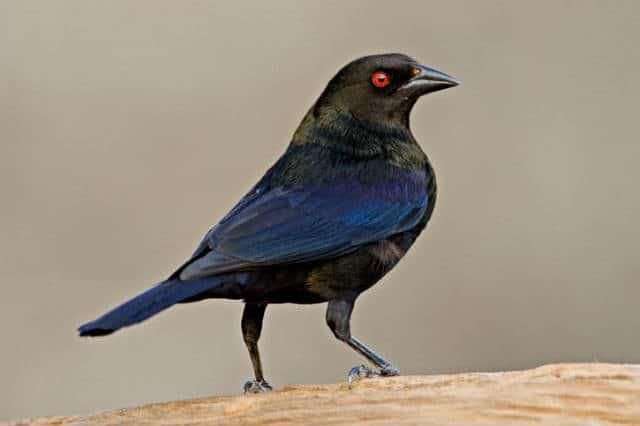 observacion-aves-mayab-640px-16