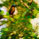 observacion-aves-mayab-640px-17