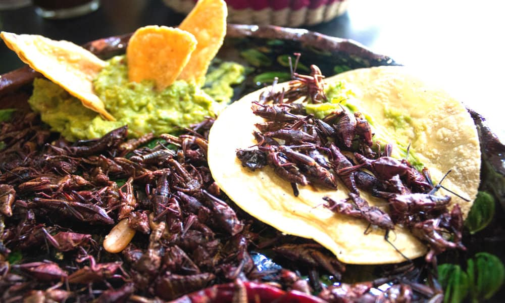 comer chapulines Time Out México
