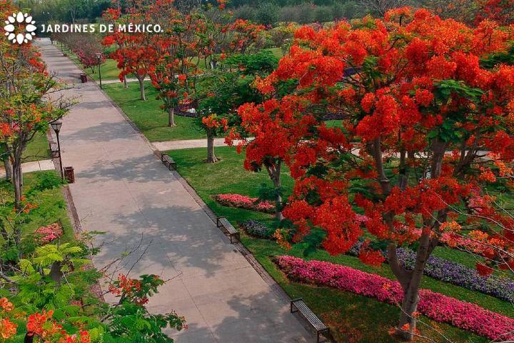 Árbol Rojo . Foto: JardinesdeMéxico