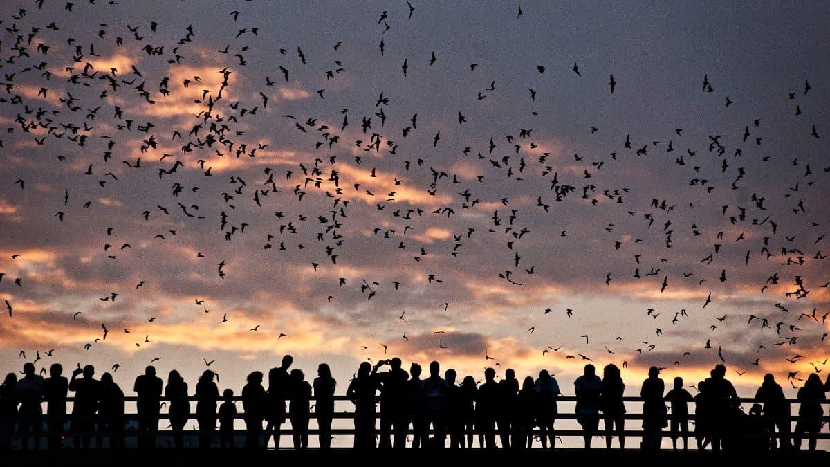 Austin Bats (1)