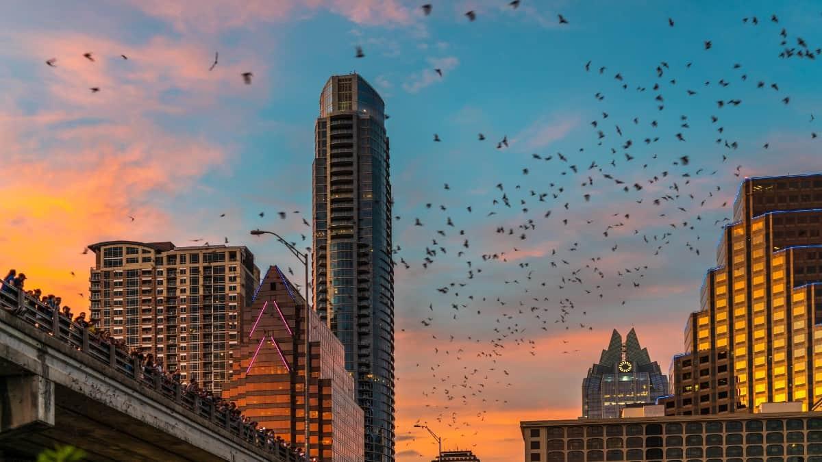 Austin Bats. Foto: David Evenson