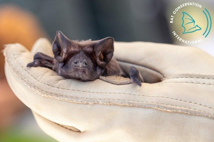 Bat Conservation International. Foto: Bat Conservation International