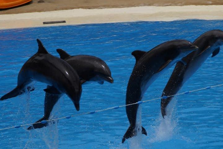 Delfines Foto Efraimstochter