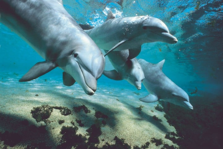 Atrévete a nadar con delfines. Foto veronica.cyrot