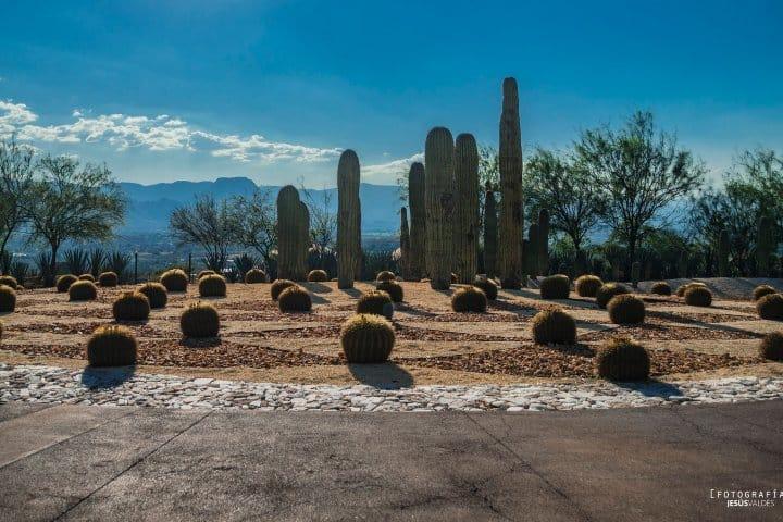 Jardines de México. Crédito a Jesus Valdes.