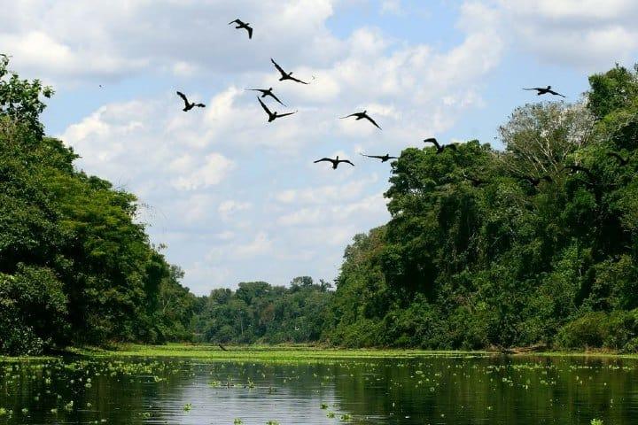 Reserva Nacional de Pacaya Samiria. Foto: Perú de Ensueño