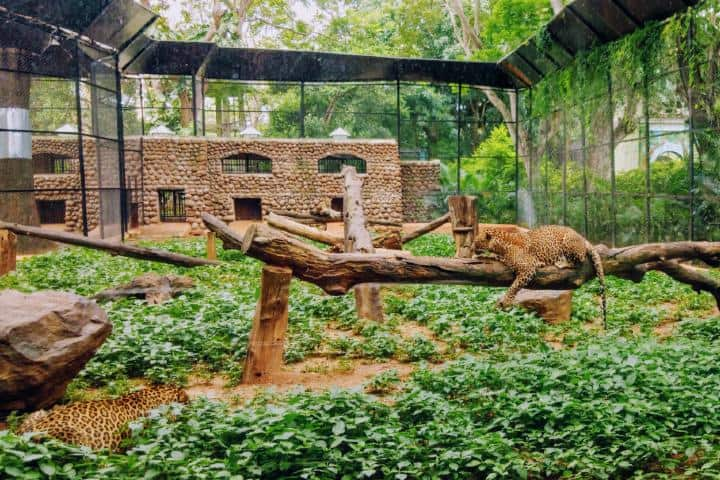 Zoo de Granby. Foto:  Venkat Sudheer Reddy