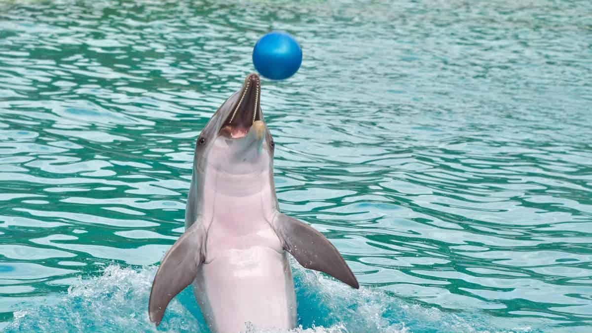 dolphin-3730716_1920