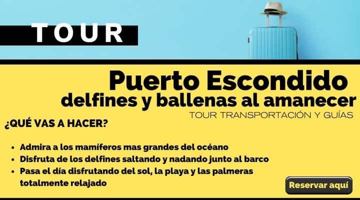Tour Puerto Escondido, avistaje de delfines y ballenas al amanecer. Arte El Souvenir
