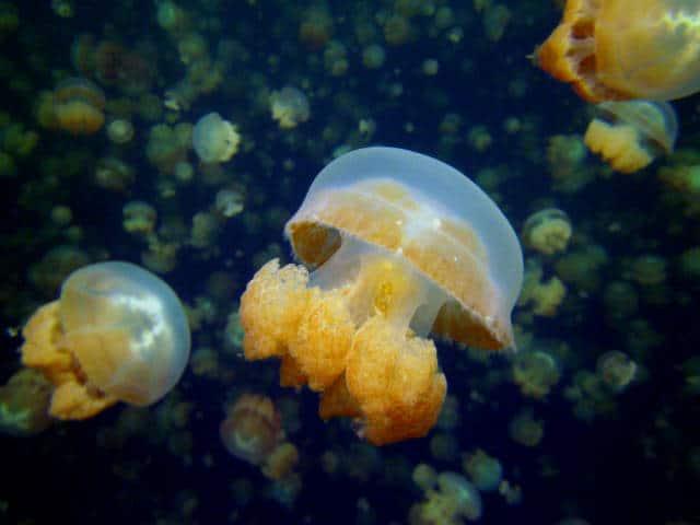 lago-medusas-01