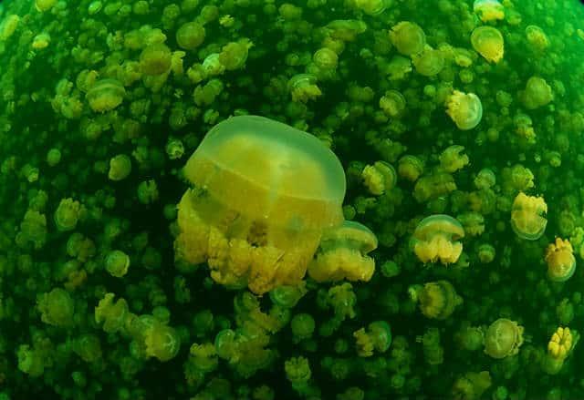 lago-medusas-03