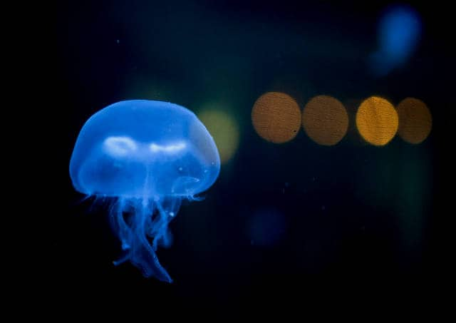 lago-medusas-05