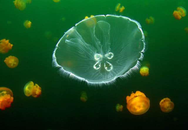 lago-medusas-09
