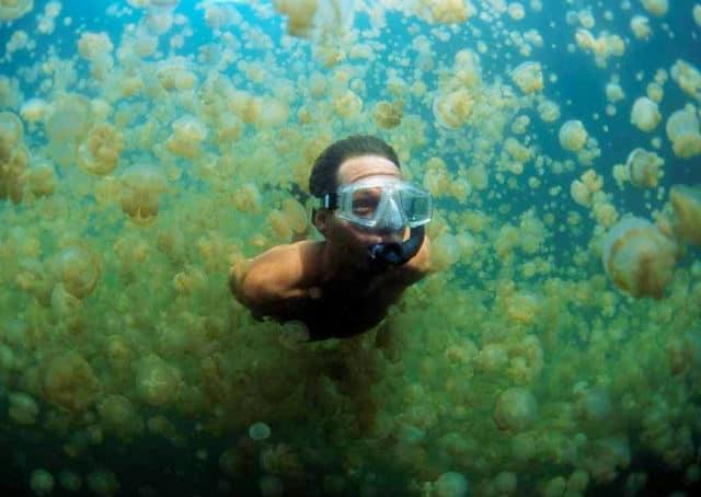 lago-medusas-11