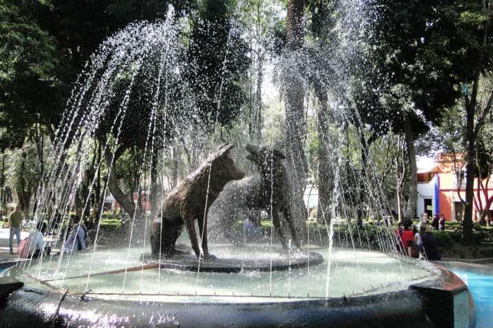 fuente-coyotes
