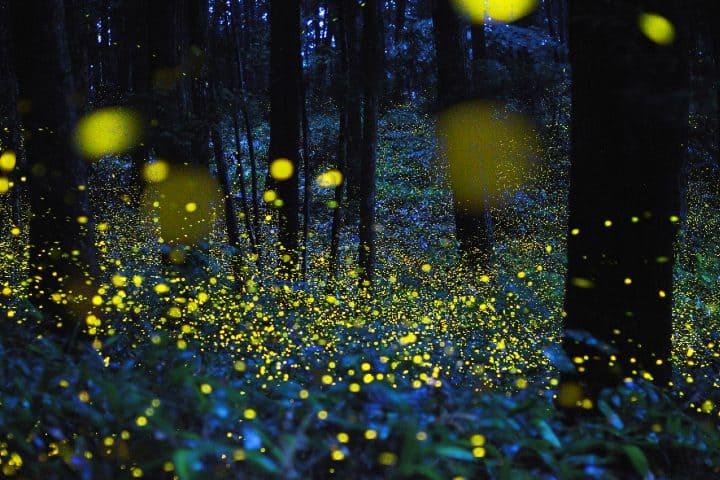 ¿Cómo reservar una visita al santuario de las luciérnagas?